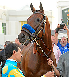American Pharoah became the first Triple Crown winner since 1978 after winning the Belmont Stakes on June 6th. Photo: Anne M. Eberhardt